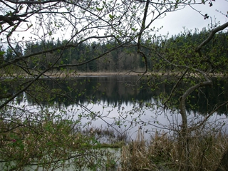 Cannery Pond Restoration Feasibility Study