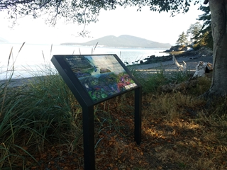 Tide Pool Interpretive Sign